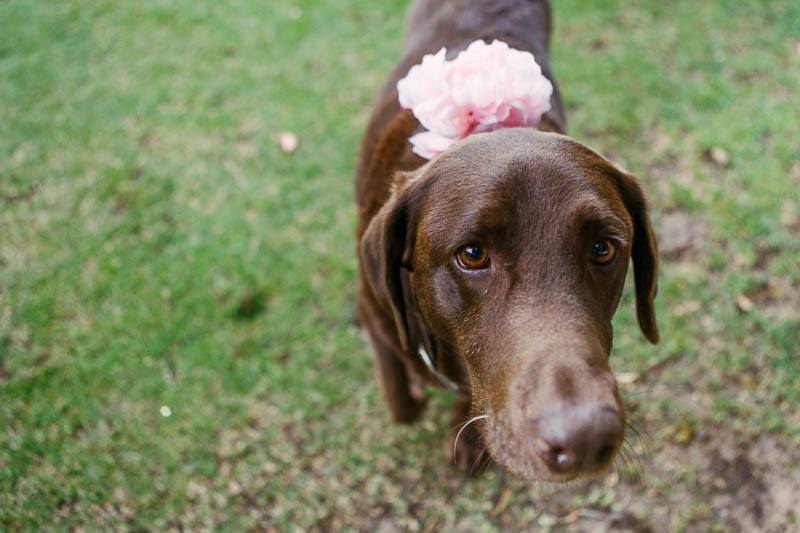 The brides dog with a pretty colar